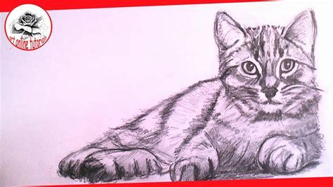 draw  realistic cat  pencil step  step