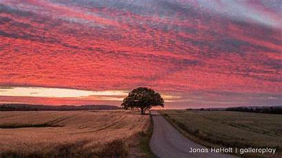 Road Country Sunset Lonely Tree