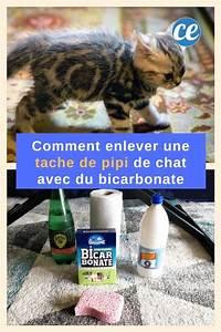 Detacher Linge Blanc Avec Bicarbonate Soude : comment faire dispara tre une tache de pipi de chat avec du bicarbonate ~ Nature-et-papiers.com Idées de Décoration