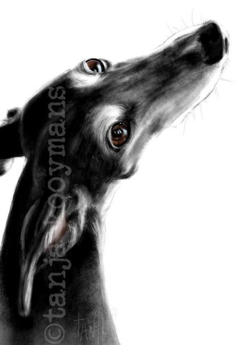 TanjaOnTheWall in 2020 | Greyhound art, Whippet, Dog print art