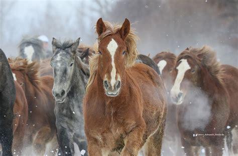 fuer pferde pernaturam