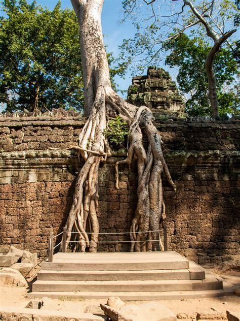 Ta Prohm, Angkor, Siem Reap, Cambodia - Tomb Raider Temple