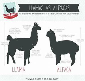 533 best LLAMAS & ALPACAS images on Pinterest | Llamas ...