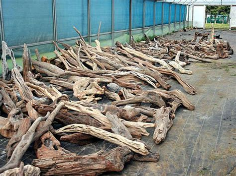 driftwood ls for sale image gallery large driftwood