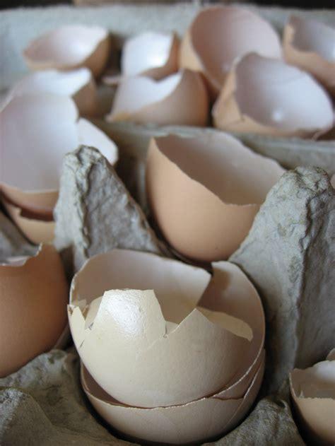 Eggshells In Garden by On Bike Using Egg Shells In The Garden