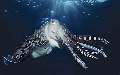Sea Animals Wallpapers Marine Wallpapersafari Wallpapertag Windows