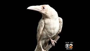 California bird caretaker heartbroken over fowl play - CBS ...