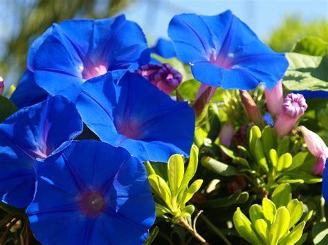 lets enjoy  beauty  beautiful flowers   world