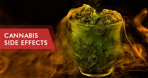 marijuana side effects short  long term reactions