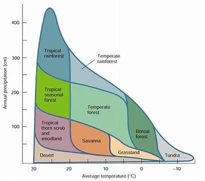 Biomes Climate Precipitation Chart Biology Rainforest Different