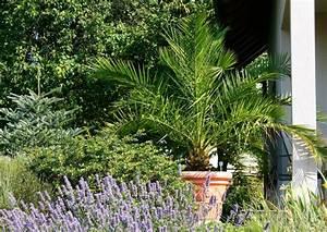 Palmenarten Für Draußen : kann ich meine palme yucca draussen berwintern ~ Michelbontemps.com Haus und Dekorationen