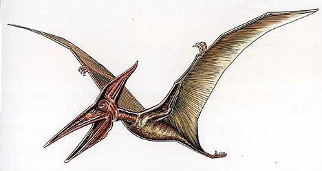 pterodactyls extinct animals