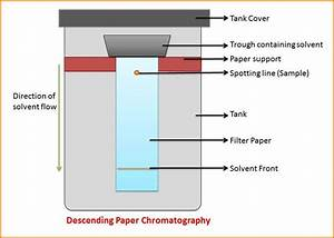What Is Paper Chromatography  Principle And Procedure