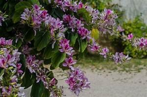 Baum Pflanzen Anleitung : orchideenbaum pflanzen pflanzanleitung tipps zu standort substrat ~ Frokenaadalensverden.com Haus und Dekorationen