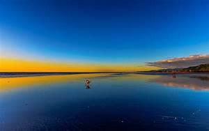 壁纸 海滩,海,日落,狗 2560x1600 HD 高清壁纸, 图片, 照片