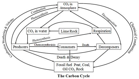 carbon cycle biology