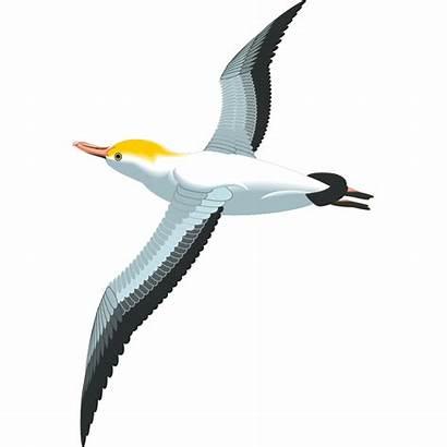 Flying Sea Burung Gull Terbang Gambar Clipart