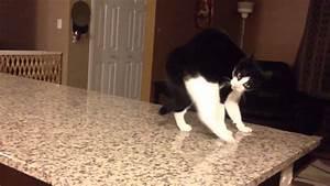 Cat crip walks - YouTube
