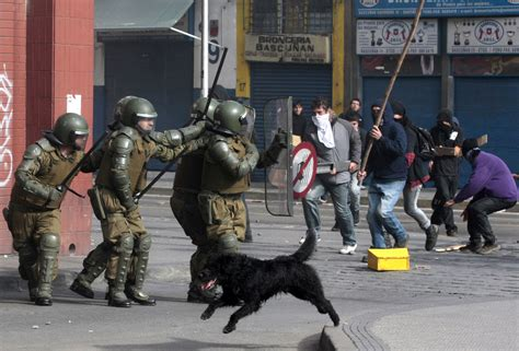 chilean street dogs  protesters  friends  blade