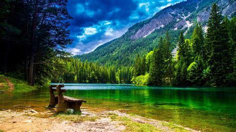 wonderful mountain landscape  green pine forest green