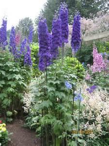 Tall Blue Perennial Flowers for Garden