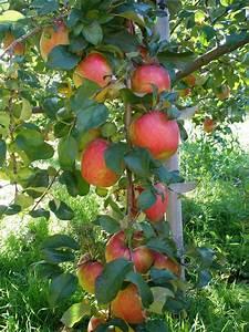 A Life Of Apples  Rainy Days And Honey Crisp Cider