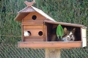 Cabane Pour Chat Exterieur Pas Cher : chat cabane chat dr le sur chat ~ Teatrodelosmanantiales.com Idées de Décoration