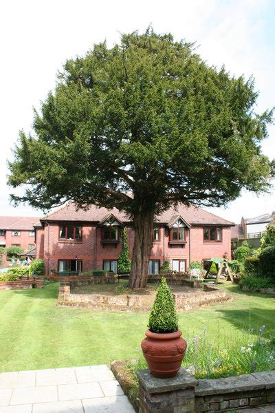 bartlett tree garden services tree surgeons