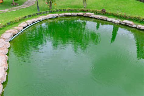 algen im teich hausmittel algen im schwimmteich 187 so verhindern sie deren ausbreitung