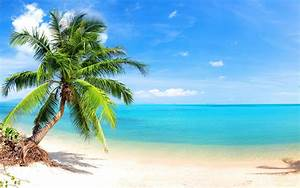 Palm Tree on Tropical Beach Full HD Wallpaper and ...