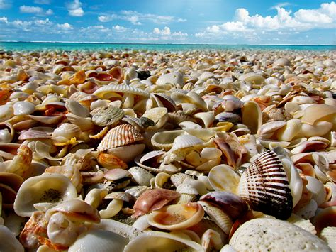 Sea Shells – The Welcome Guide to the British Virgin Islands