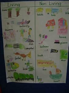 Using A T Chart Kindergarten Science Kindergarten