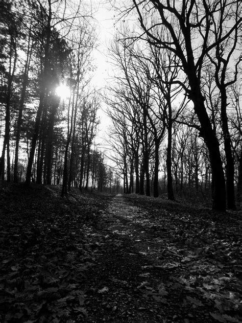 monochrome path forest park kragujevac serbia