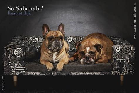 canapé pour grand chien canape pour chien de luxe le couture gris