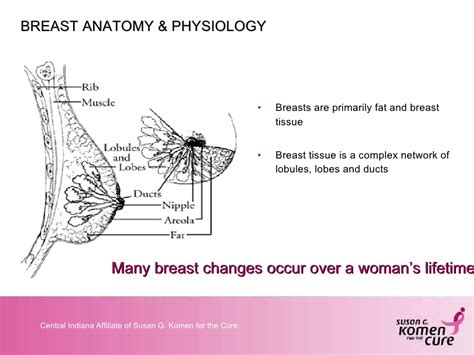 Outstanding Anatomy And Physiology Tissue Slides