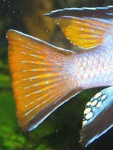 Fischflossen
