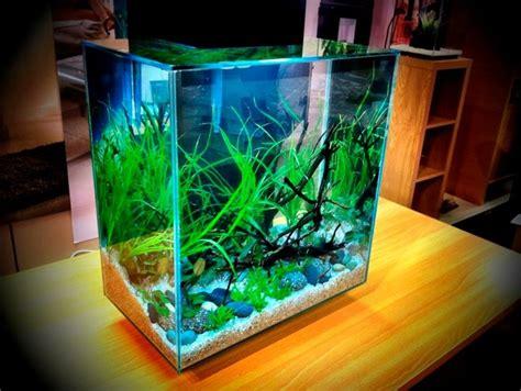 Fluval Edge 46l Nice Setup  Fluval Edge Aquarium