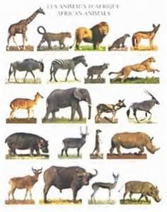 Le Animaux Savane by Les Animaux De La Savane Africaine Blog De Hawa333