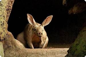 strangest-and-rarest-animals-in-world08