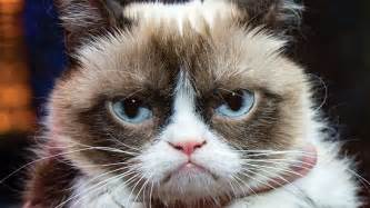what of cat do i grumpy cat image gallery your meme