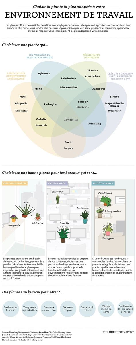 plante pour bureau les 25 meilleures idées concernant plantes de bureau sur