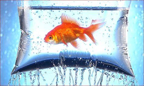 aquarium fish  hd wallpapers hd wallpapers