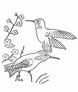 Hummingbird Coloring Pages Printable Flower Traceable Hummingbirds Bird Birds Template Simple Flowers Print Popular Templates Getcoloringpages Monkey Library Clipart Winter sketch template