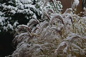 Winterharte Kübelpflanzen Als Sichtschutz : winterharte k belpflanzen als sichtschutz gamelog wohndesign ~ Michelbontemps.com Haus und Dekorationen