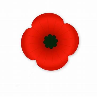 Poppy Remembrance Veterans Reme Tcdsb Board Week