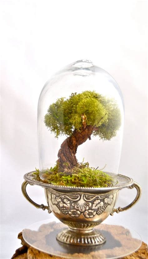 tree terrarium beautiful  moss terrarium hand