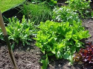 Planter Des Graines De Tomates : semer des tomates ~ Dailycaller-alerts.com Idées de Décoration