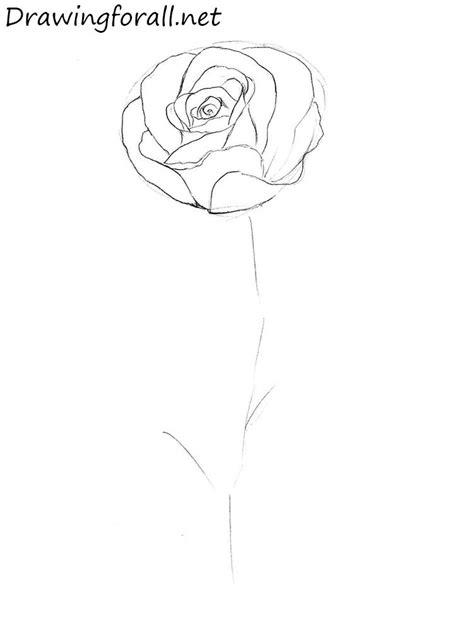 draw  rose step  step drawingforallnet