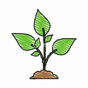 Cartoon Plant   Adultcartoon.co