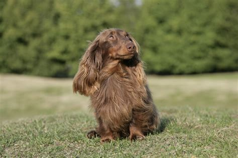 ovidie canape 21 images chien elevage d teckel eleveur